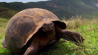 charles-darwin-39-s-galapagos-discovery-attenborough90-bbc