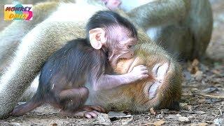 Adorable newborn Opie & Calino happy with milk mom   Cute activity babies happy   Monkey Daily 3349
