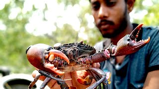 """Catching """"CRABS"""" in Sundarban Forest"""