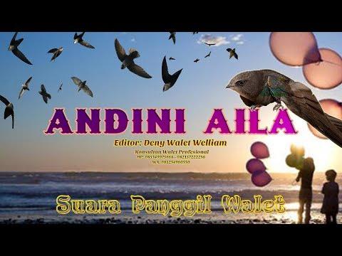 Panggil Walet ANDINI AILA Editornya Konsultan Walet Terkenal