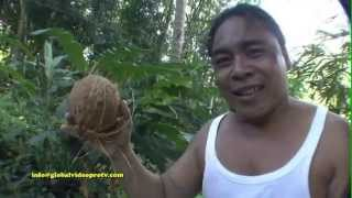 worlds fastest coconut husker with teeth bohol island philippines