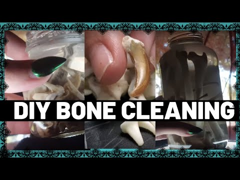 DIY Roadkill Bone Cleaning!💀(Coyote??)