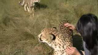 Come come come Cheetahs!