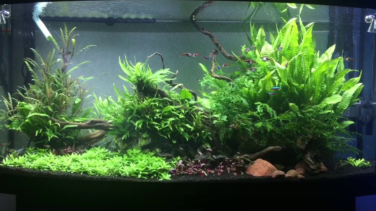 Juwel Vision 260 + Helialux LED 1200 Planted Tank - YouTube