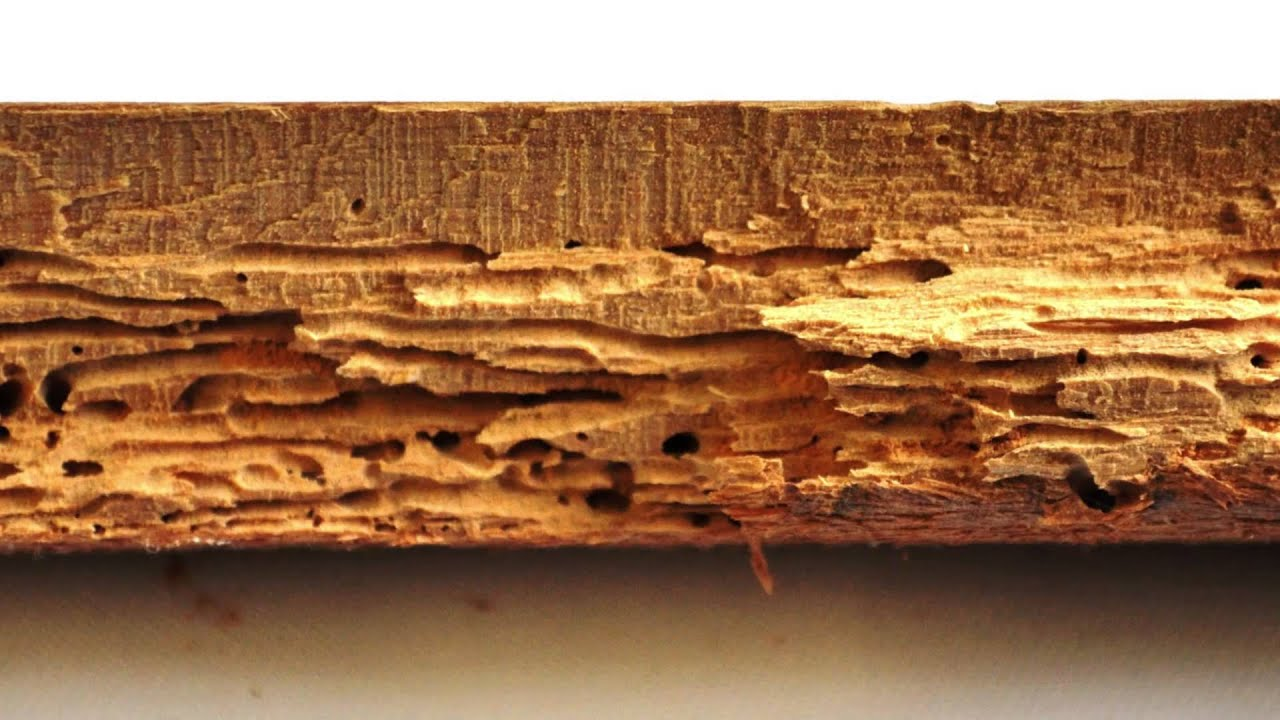 What is Woodworm? Problems and Woodworm Treatment by Protum Services  Ireland - Protum.ie - What Is Woodworm? Problems And Woodworm Treatment By Protum Services