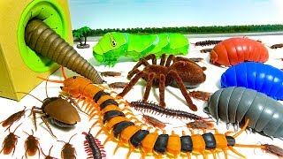 🐛🕷️ Various Species of Insects Get Into Box Spider Centipede Cockroach Toy