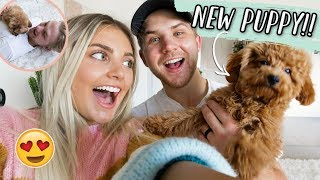 SURPRISING MY HUSBAND WITH A PUPPY!!!