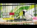 Langsung Gacor Dor Glatik Bahan Dan Glatik Macet Perlahan Akan Bunyi Setelah Denger Burung Ini  Mp3 - Mp4 Download