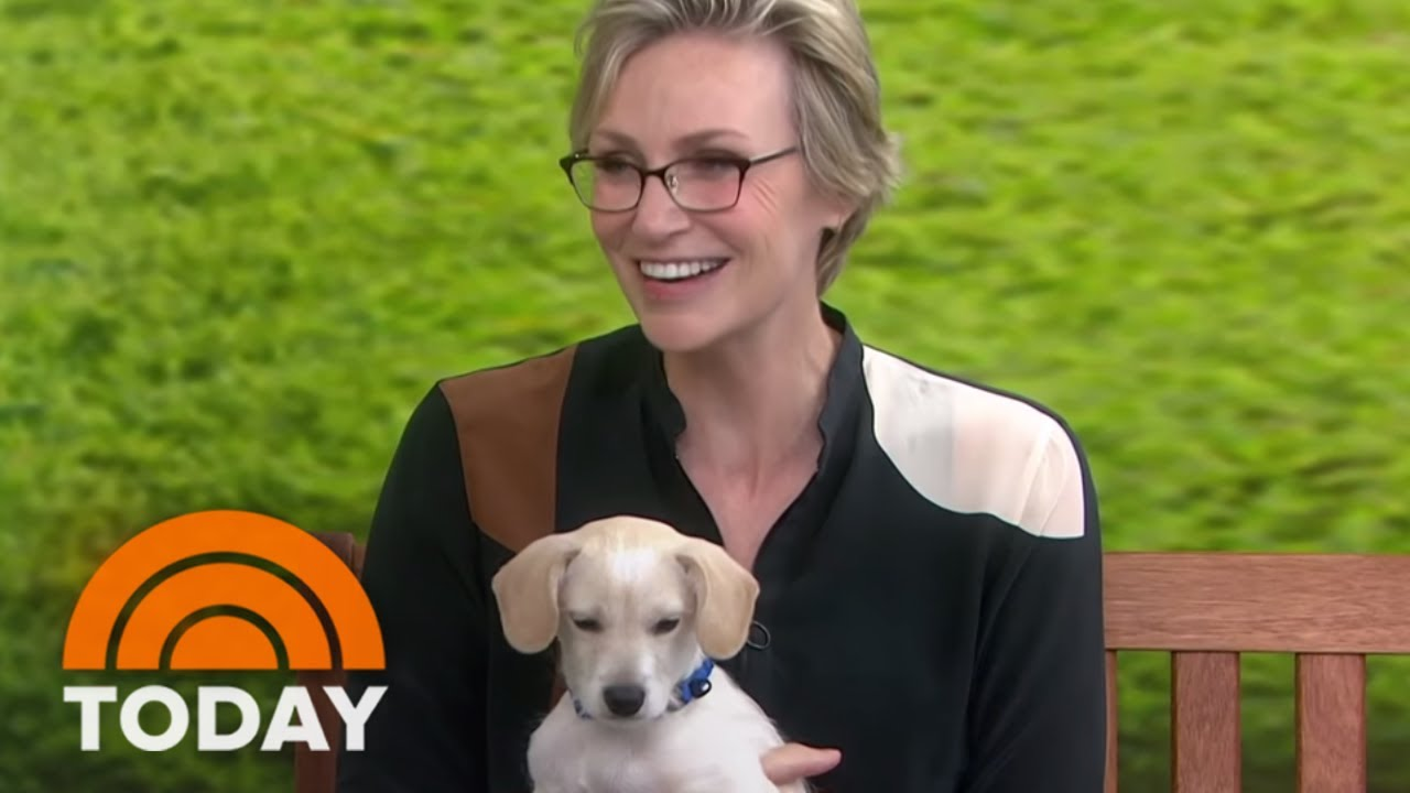 Jane Lynch Joins KLG And Hoda To Help Clear The Shelters | TODAY