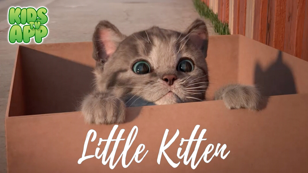 Little Kitten My Favorite Cat Fox And Sheep Gmbh Best App For Kids Youtube