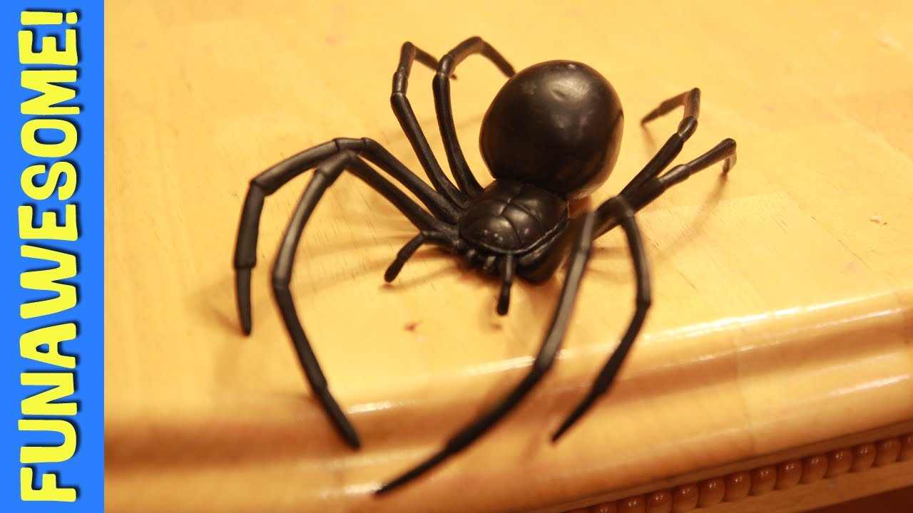 10 Fascinating Facts About Black Widow Spiders