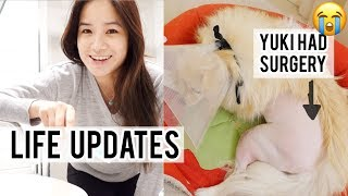 Updates, Going Back to University | My dog had surgery 😭