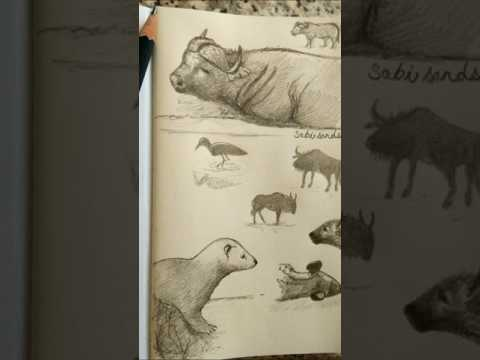 Sketches from safarilive(twice daily live drives from south africa for nature lovers here on youtube