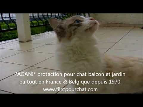 protection pour chat à Luxembourg