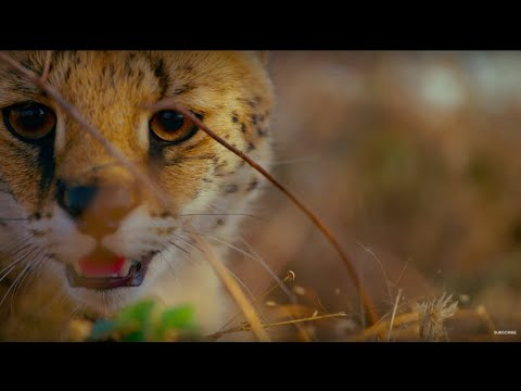 Earth: One Amazing Day - BBC Earth