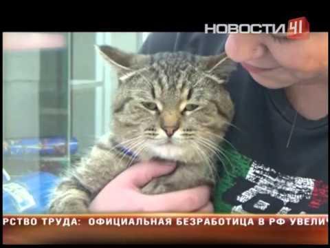 Домашняя кошка в беде: признаки бешенства у животного