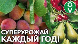 ЭТО НУЖНО ПЛОДОВОМУ САДУ УЖЕ СЕЙЧАС! Чем подкормить и как защитить сад во второй половине лета