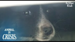 'I Don't Trust Humans Anymore' A Dog Never Come Out From Under A Container | Animal in Crisis EP128