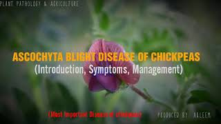 ASCOCHYTA BLIGHT DISEASE OF CHICKPEAS | Introduction | Symptoms | Management