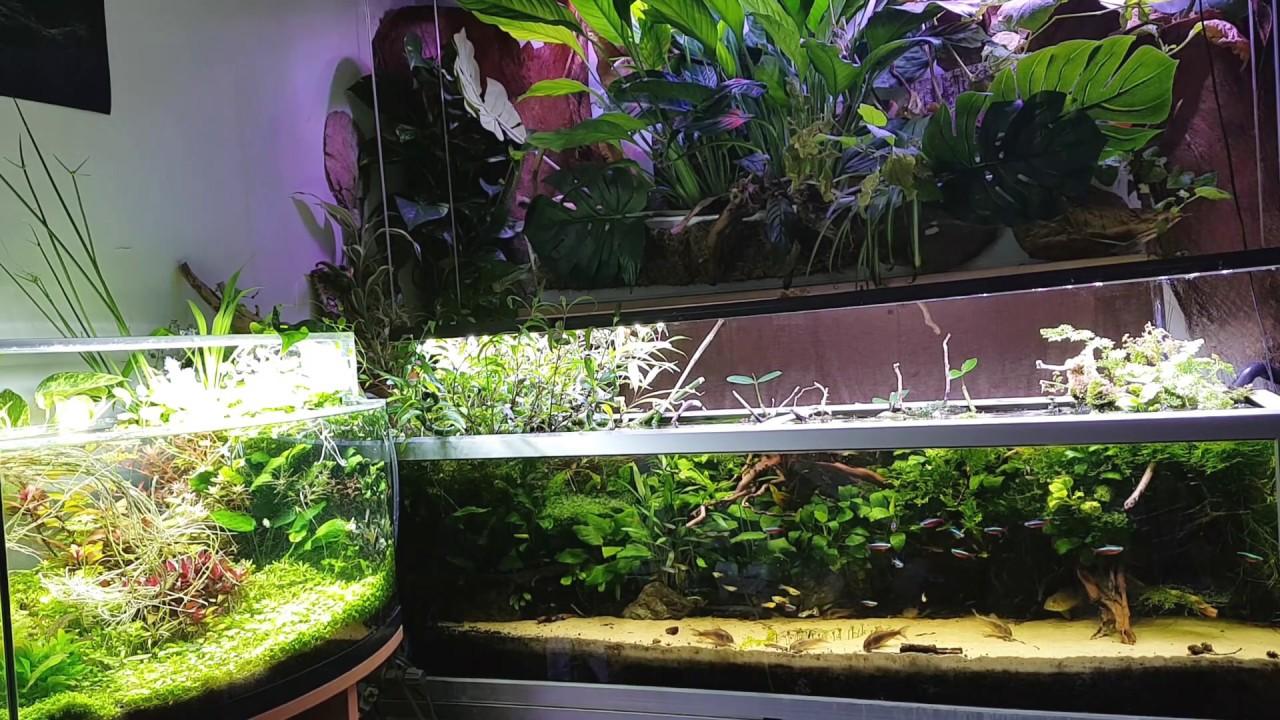 Jakie Podłoże Do Akwarium Roślinnego