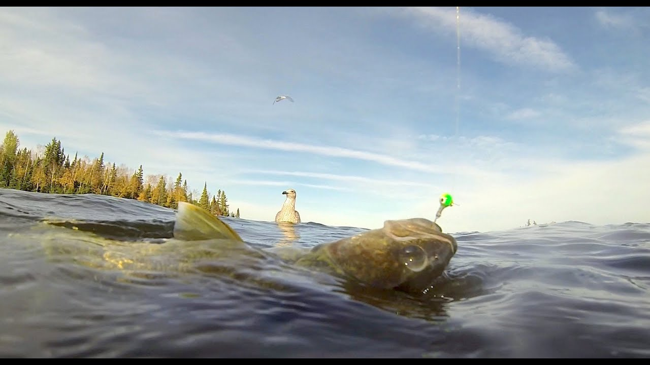 Lac seul fall walleye fishing october 2013 youtube for Lac seul fishing report