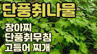 단풍취나물로 만드는 고등어찌개 / 장아찌 / 무침