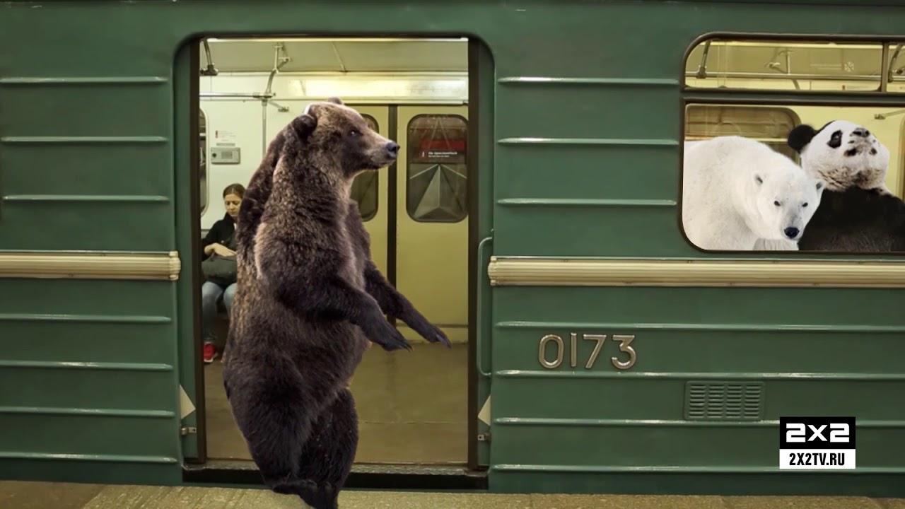мишка на поезде картинки эту руку вправо