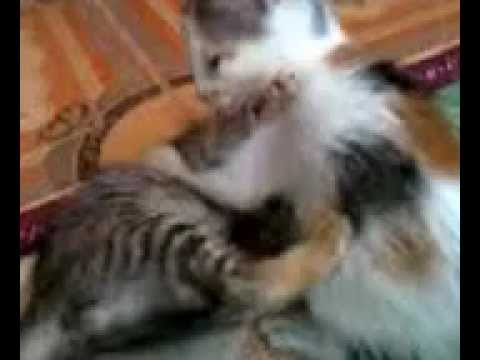 anak kucing lucu.mp4