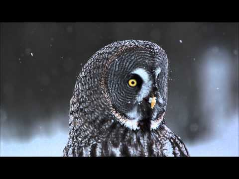 Frozen Planet: 2012 YouTube Audience Award Nominee