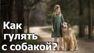Как правильно выгуливать собаку / How to walk a dog properly