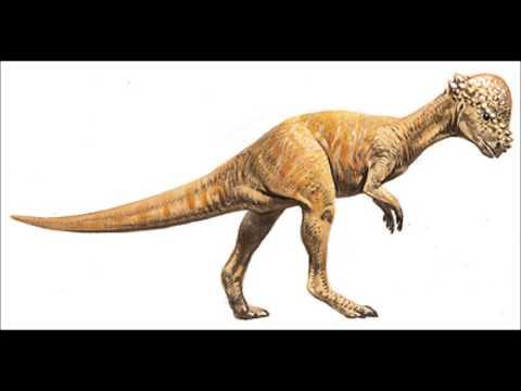 The Pachycephalosaurus