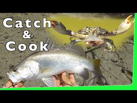 Catch n Cook Mud Crabs with Barramundi Fishing Andy's Fish Video EP.345