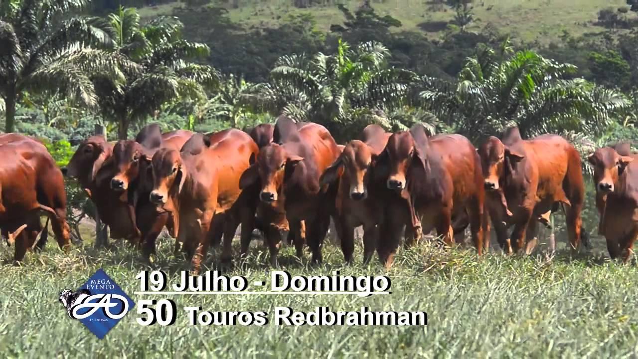 Itagibá Bahia fonte: i.ytimg.com