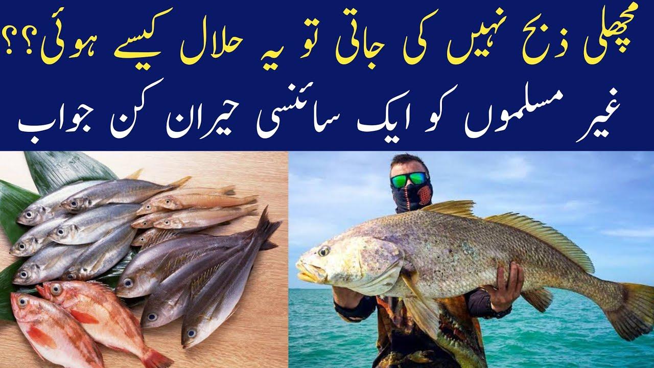 Why fish is not slaughtered but still halal in islam | machli islam me  halal kiyu he | urdu / hindi