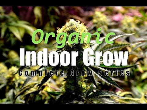 Indoor Organic Cannabis