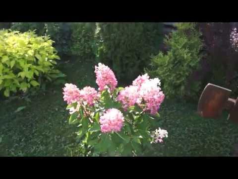 видео: Как я съездила в гости Чудесный сад Детский спектакль Садовая пирамидка своими руками