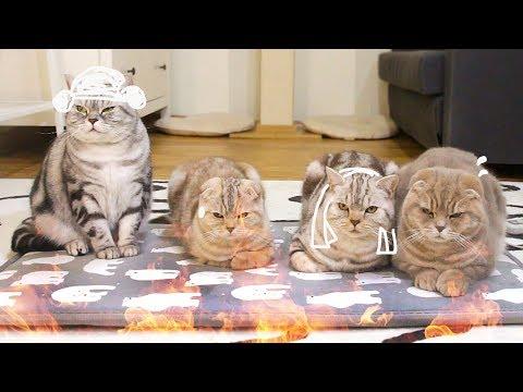 고양이들에게 전기방석을 깔아주다. Cute Cats on an Electric Heating Pad. 猫たちに電機座布団を敷いてやる[SURI&NOEL]