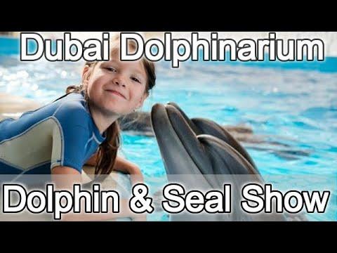 Dubai Dolphinarium Dolphin & Seal Show : Family Entertainment : Most Loved Dubai Tourist Attractions