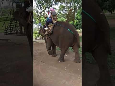 Raffa Naik Gajah Di Taman Wisata Candi Borobudur