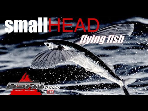 Small Head Flying Fish - Species