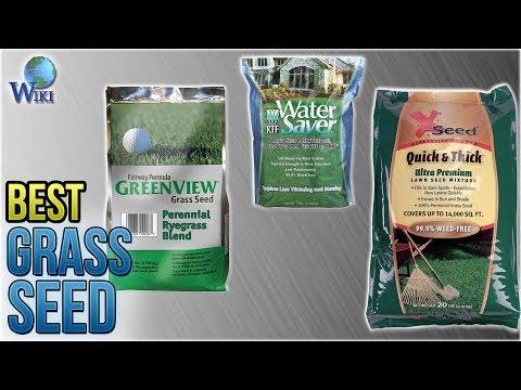 7 Best Grass Seed 2018