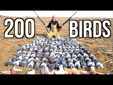 SHOOTING 200 Pigeons!!! Kansas Pigeon Hunting 2017