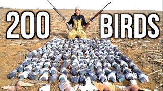 Download Video SHOOTING 200 Pigeons!!! Kansas Pigeon Hunting 2017 MP3 3GP MP4