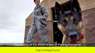 Dog Training {Town}