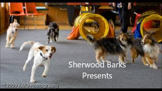 Sherwood Barks Presents.....'a Glimpse Into Puppy Class'