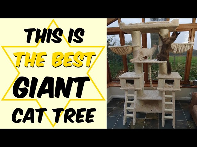 Building a Cat Tree for Maine Coons - 300 subscriber special