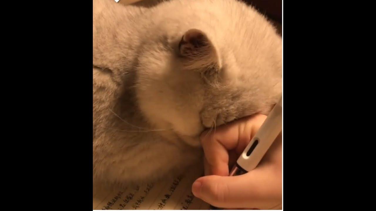 I can never do my homework