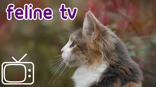 Instant Cat Relaxer - Nature TV for Cats!