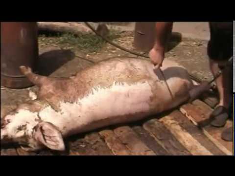 Разве свинина в полутушах клейменая на бойне и имеющая справка форма №2 не является готовым рыночным продуктом, например как свежемороженые. Настоящий стандарт распространяется на свиней, предназначенных для убоя, свинину в тушах и полутушах, предназначенную для.
