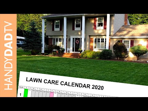 Easy Lawn Care Program (Beginner and Advanced) // Updated for 2020
